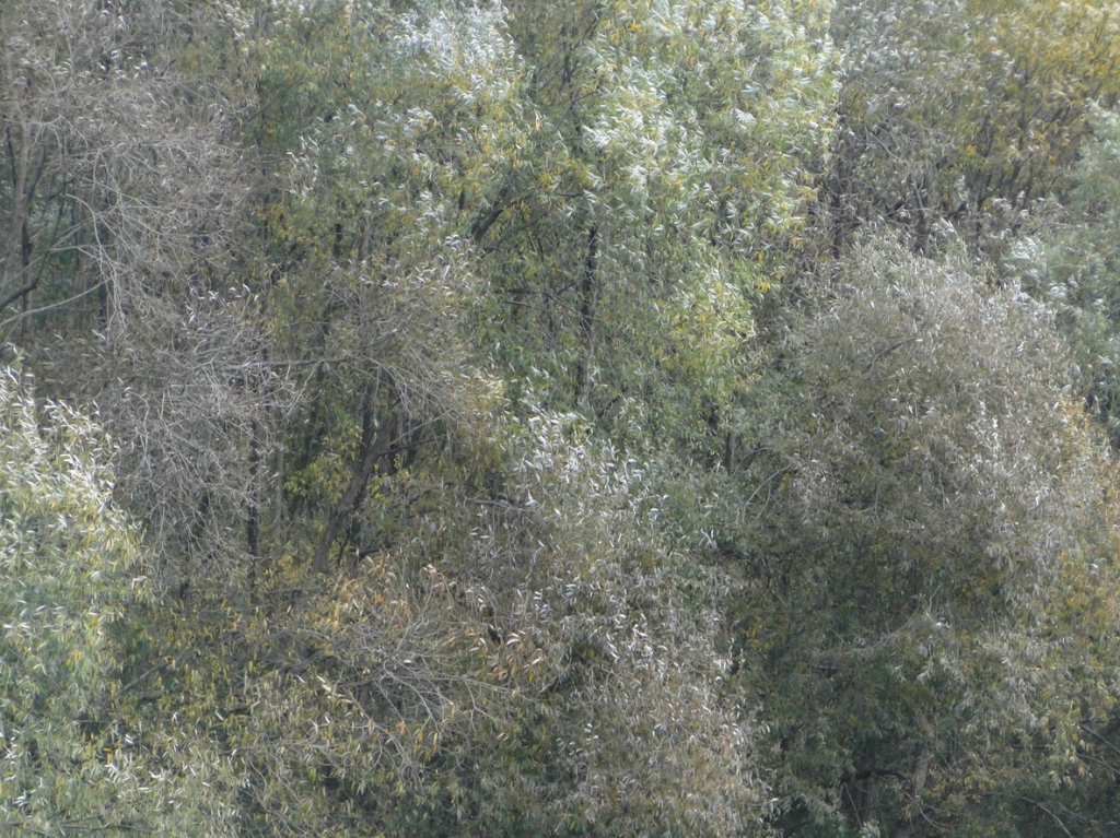Wind- und Lichtspiel im Auenland
