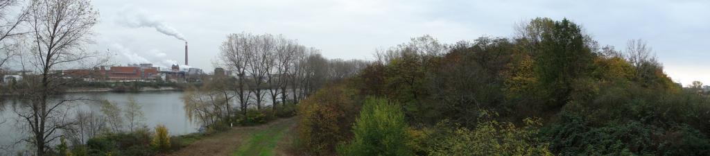 Blick auf den Altrhein, im Hintergrund Industrieansiedlungen entlang der Sandhofer Strasse